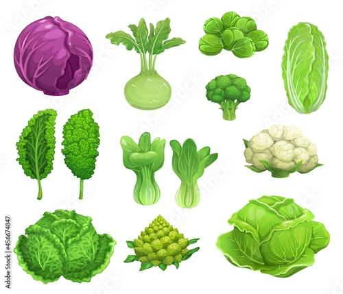 Canvas Cartoon vector cabbage and cauliflower vegetables, fresh farm food
