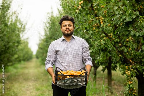 Farmer showing harvest of fresh sweet apricots Fototapet