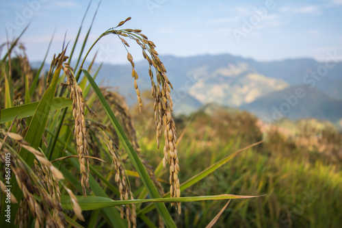 nature, way of life of villagers Fototapeta