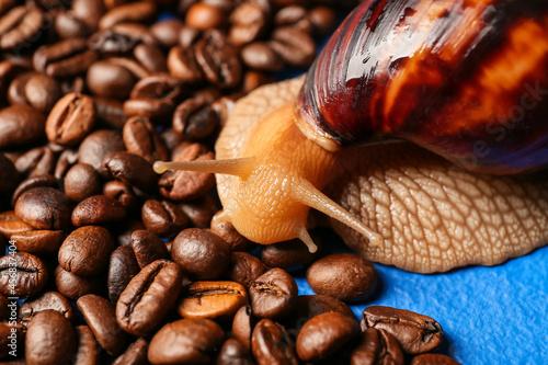Billede på lærred Giant Achatina snail and coffee beans on color background, closeup
