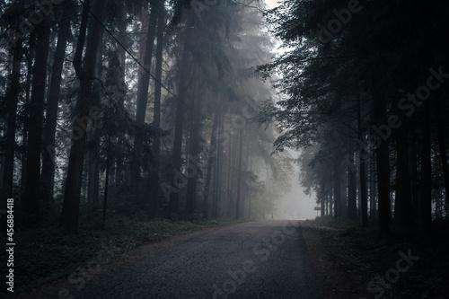 Foto Landstraße zwischen hohen Nadelbäumen im Nebel - Herbszeit, Halloween- gruselige