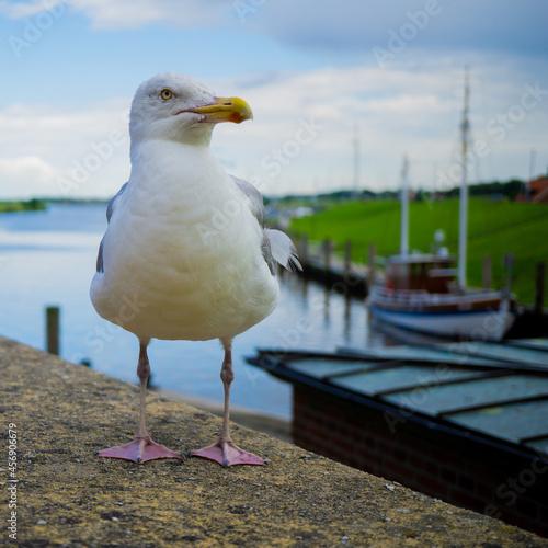 Fototapeta premium Portrait of a seagull on the beach
