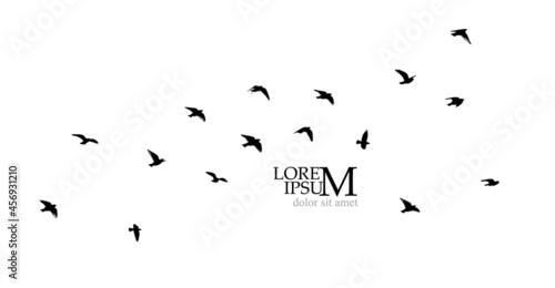 Canvas Print A large flock of flying birds. Free birds. Vector illustration