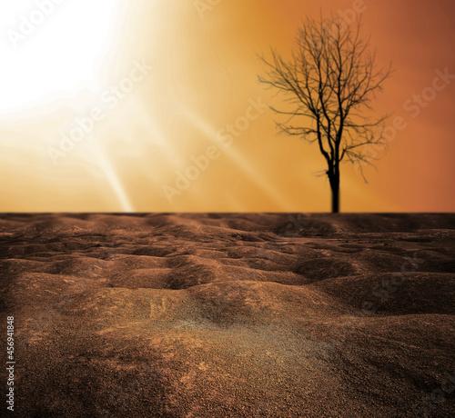 Fotografija The background image of the dead tree drought It does not rain seasonally