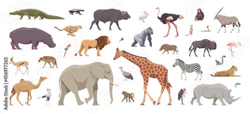 Fototapeta premium Flat set of african animals. Isolated animals on white background. Vector illustration