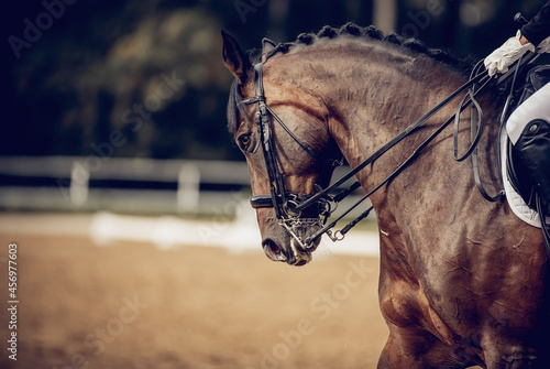 Valokuva Portrait sports stallion in the bridle. Equestrian sport.