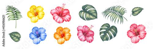 Fotografia Watercolor elements of blooming hibiscus