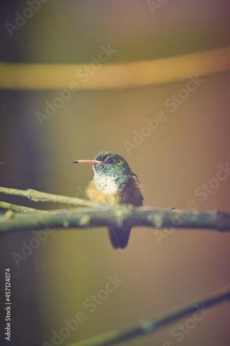 Fototapeta premium oiseau