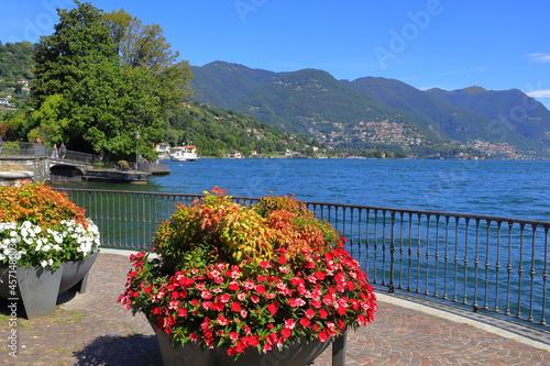 Obraz na plátně Fiori sul lago di Como, Italia, Flowers on Lake of  Como, Italy