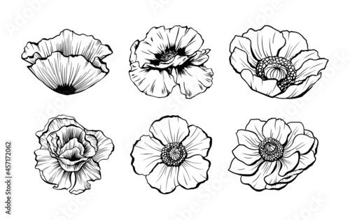 Fotografía Poppy flowers, anemone wildflower sketch ink line