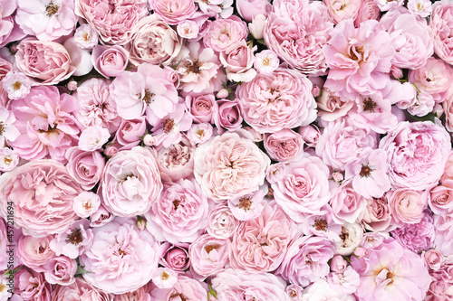 Leinwand Poster Delicate blooming festive soft pale roses on light pink background, blossoming f