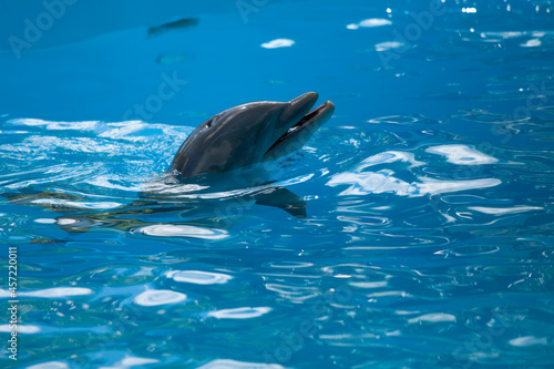 close up portrait of dolphin peaking out of water look eye Fototapet