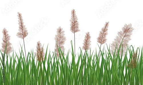Obraz na płótnie Realistic reeds isolated on white background