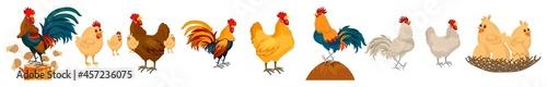 Fotografija Set Of Chicken Icons