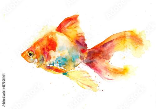 Obraz na plátně 金魚, 夏休み, 水彩, 水彩画, 日本画, イラスト, 絵画, デザイン, 模様, 日本, 春, 夏, 秋, 冬, 自然
