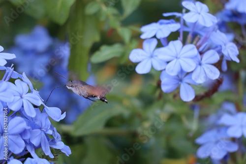 Fototapeta premium bee on flower