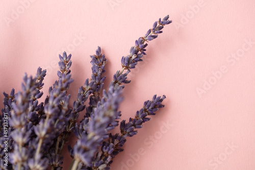 Fotografering Beautiful dried lavender flowers on a pastel pink background