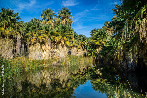 Simone Pond at McCallum Grove in Palm Spring, California