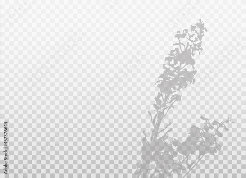 Billede på lærred Shadow of flowers isolated on transparent background
