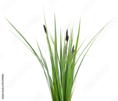 Fotografia Bunch of green sedge with flower.