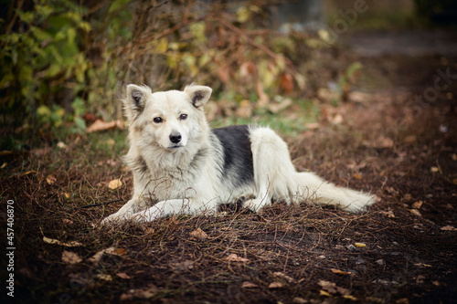 Dog lying half with fallen leaves