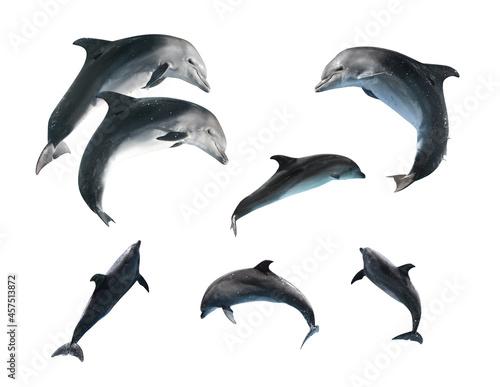 Fototapeta Beautiful grey bottlenose dolphins on white background, collage