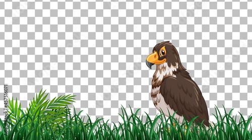 Fotografia Hawk standing on the grass field on transparent background