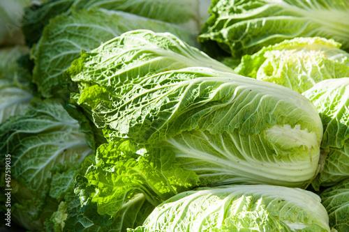 Fresh korean cabbage to make kimchi Fototapeta