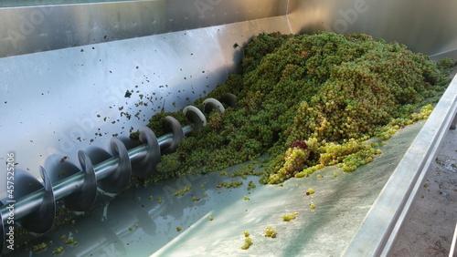 Tela Uva per la produzione del vino