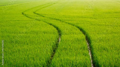Obraz na plátně Curve track line of spraying tractor after spraying fertilizer completely in gre