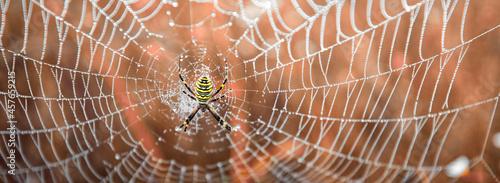 Fotografía Argiope bruennichi Yellow-black spider in her spiderweb