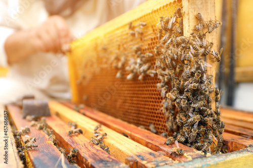 Foto Beekeeper taking frame from hive at apiary, closeup