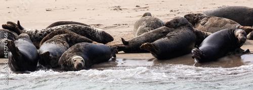 Photo Grey seal colony off Kerry coast, Ireland