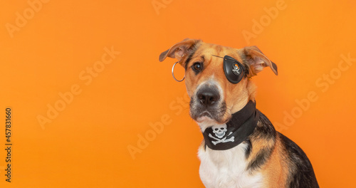 Fotografering A funny tricolor outbred dog dressed up as a pirate with eye patch on orange background