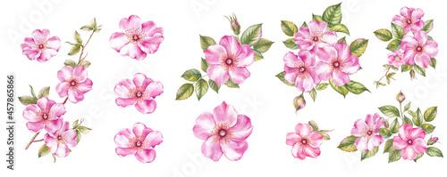 Canvas Watercolor elements of blooming sakura