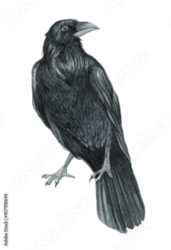 Canvas Print Watercolor raven illustration, crow on the white background, Black bird illustra