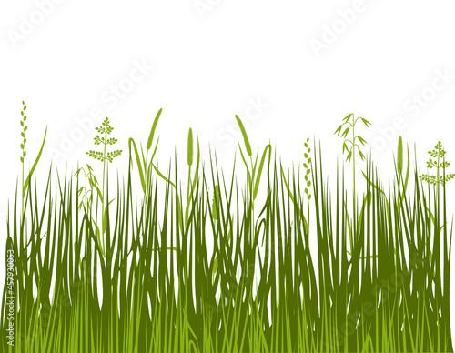 Green lawn grass with grasses and sedge Tapéta, Fotótapéta
