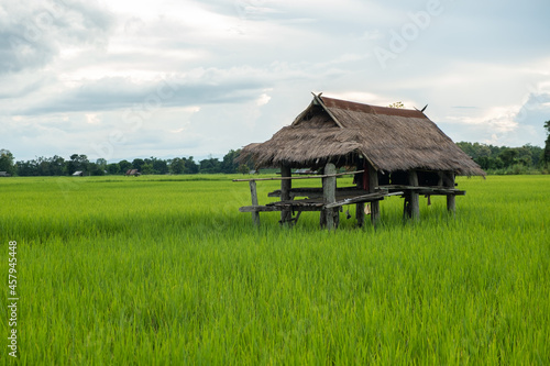 Canvastavla The hut is made of zinc. Cabin in rice field.