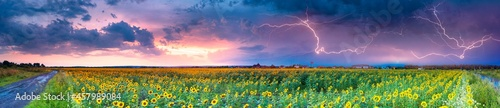 Fotografie, Obraz Sunflower field and stormy sky