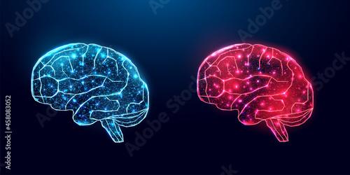Fotografiet Human brain