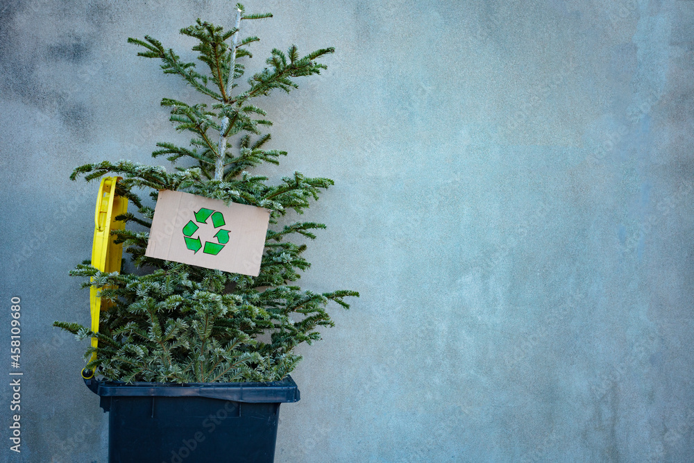 Christmas tree in bin with recycled sign cardboard
