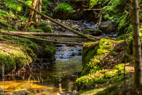 Beautiful wilderness of the bavarian forest: Dead wood as new habitat for plants Fototapet