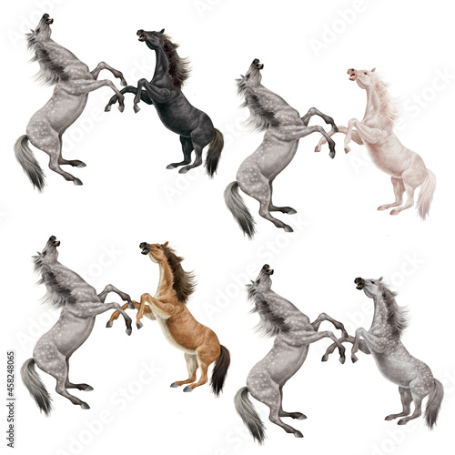 Fototapeta cheval, combat, animal, illustration, cavalier, art, saut, sauvage, étalon, équi