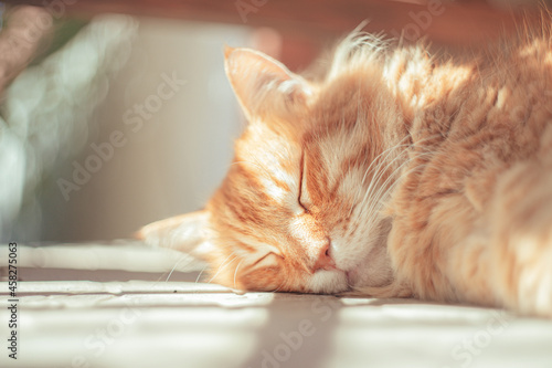 Fotografiet Closeup shot of a ginger cat sleeping with blurred background