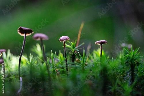 Fotografie, Obraz Close-up Of Mushrooms Growing On Field