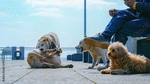 Fotografía Dogs Sitting Outdoors