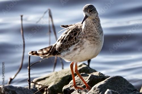 Carta da parati Close-up Of Bird Perching On Rock