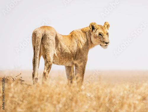 Fotografía Wild Animal  On A Field