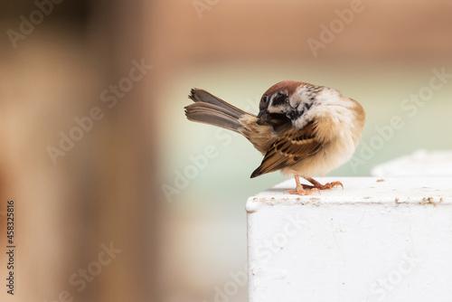 Photo Close-up Of Bird Perching On Wood