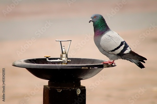 Photo Close-up Of Bird Perching On A Feeder